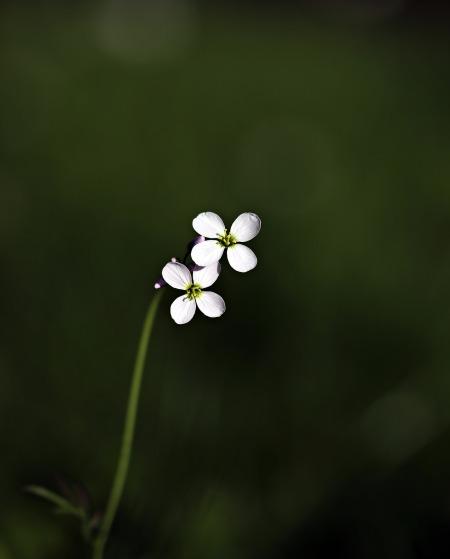 wild-flower-2226095_1920